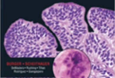 Book Review: Diagnostic Pathology: Neuropathology