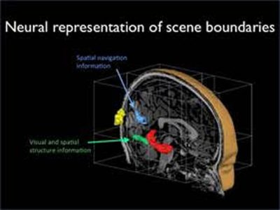The Brain Senses Boundaries, New Research Reveals