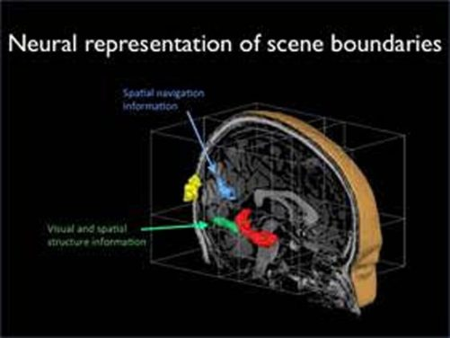 The Brain Senses Boundaries, New Research Reveals