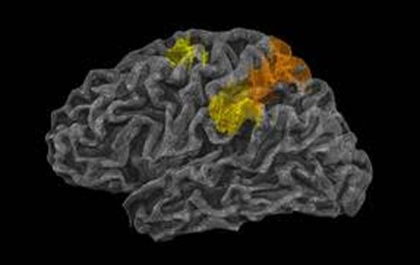 The Human Brain's 'Physics Engine' Found!
