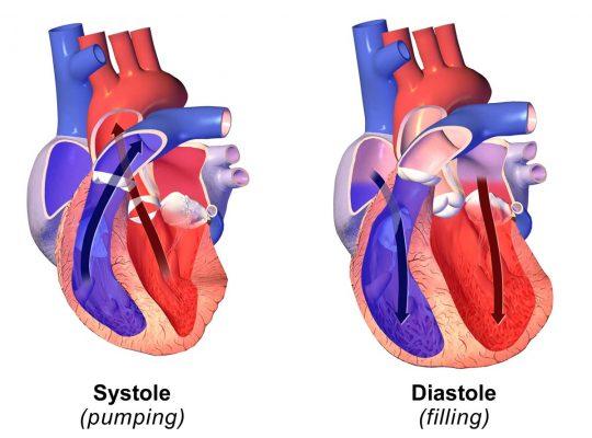 Systolic and diastolic pressure, credit Wikipedia