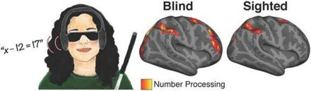 The Surprising Thing Blind People Doing Math Reveals About the Brain