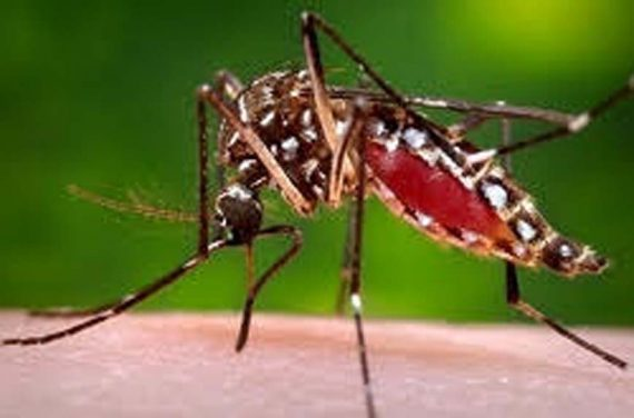 New Evidence Supports Biological Link  Between Zika Infection and Guillian-Barrė Syndrome